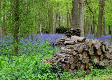 Как заготавливать дрова?