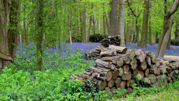 Заготовка дров в лесу